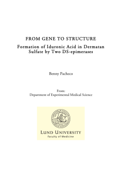 FROM GENE TO STRUCTURE Formation of Iduronic Acid in Dermatan Benny Pacheco