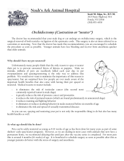 "Noah's Ark Animal Hospital_______________________ Orchidectomy (Castration or ""neuter"")"
