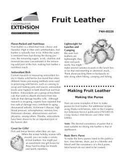 Fruit Leather FNH-00228 Flavor-Packed and Nutritious Lightweight for