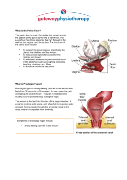 What is the Pelvic Floor?