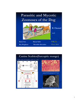 Parasitic and Mycotic Zoonoses of the Dog Canine Scabies(Sarcoptic mange) B. Chomel