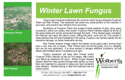 Winter Lawn Fungus