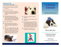 CANINE COUGH WHAT CAN I DO TO PROTECT MY DOG?