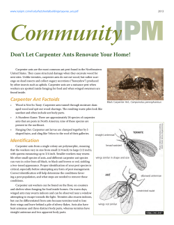 Community Don't Let Carpenter Ants Renovate Your Home!