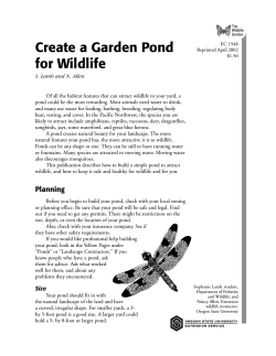 Create a Garden Pond for Wildlife