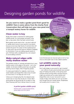 Designing garden ponds for wildlife For the perfect wild life