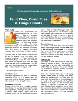 Fruit Flies, Drain Flies & Fungus Gnats