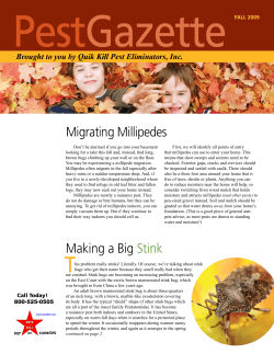 Pest Gazette Migrating Millipedes Brought to you by Quik Kill Pest Eliminators, Inc.