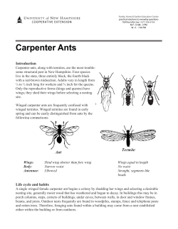 Carpenter Ants Introduction