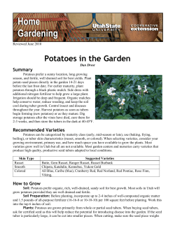 Potatoes in the Garden Summary