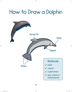 How to Draw a Dolphin Materials dorsal fin beak