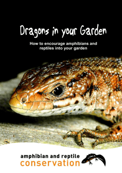 How to encourage amphibians and reptiles into your garden