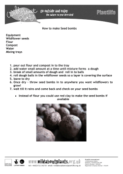 How to make Seed bombs  Equipment Wildflower seeds