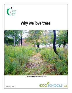 Why we love trees February 2013 Warden PS Nature Study Area