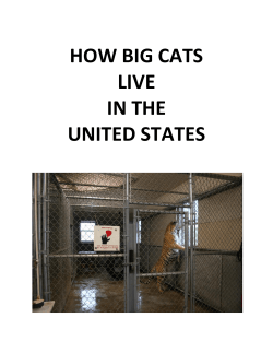 HOW BIG CATS LIVE IN THE