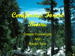Coniferous Forest Biome Cassie Conkwright And
