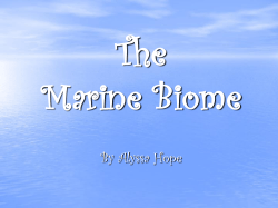 The Marine Biome By Alyssa Hope