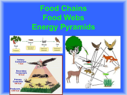 Food Chains Food Webs Energy Pyramids