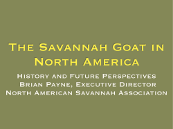 The Savannah Goat in North America History and Future Perspectives