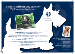 Dr Kate's KALMPETS DOG DAY STAY