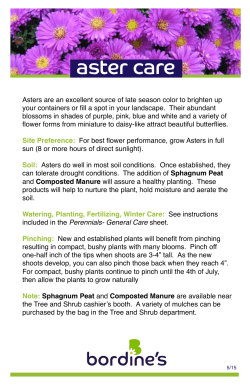 the Aster Care Sheet