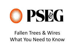 Fallen Trees & Wires What You Need to Know