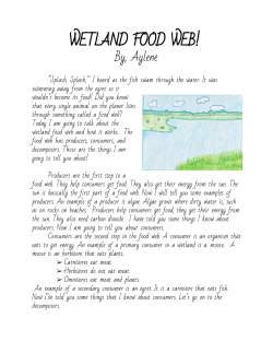 ​WETLAND FOOD WEB!