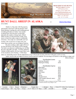 HUNT DALL SHEEP IN ALASKA