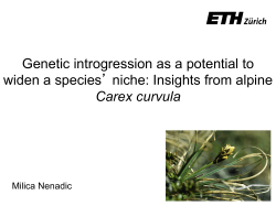 Genetic introgression as a potential to widen a species` niche