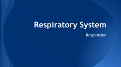 Respiratory System - Ms. Lynch`s Lessons