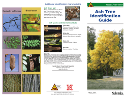 Ash Tree Identification Guide - Nebraska Forest Service