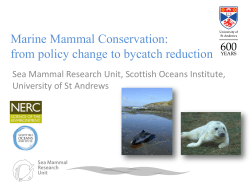 Marine Mammal Conservation: from policy change to bycatch